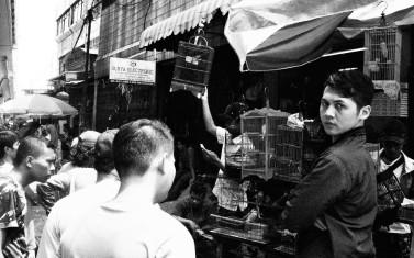 Penjual burung.
